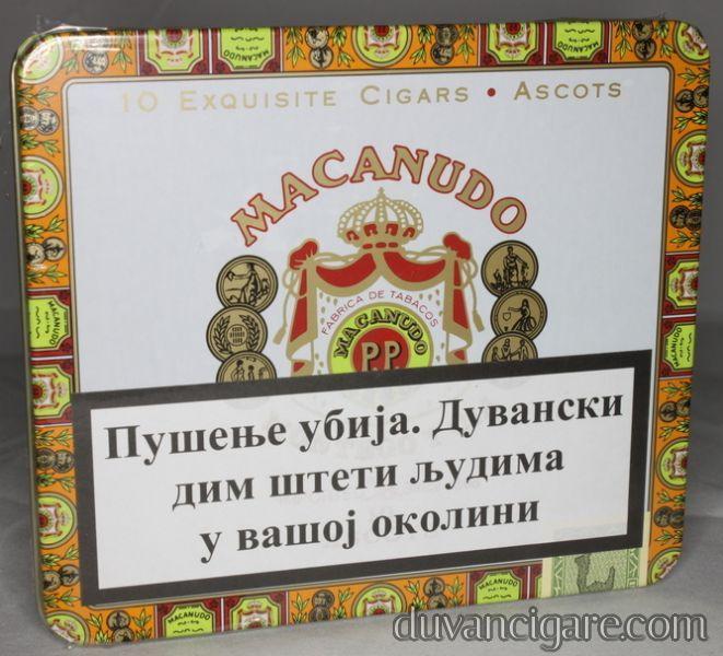 Macanudo ascots